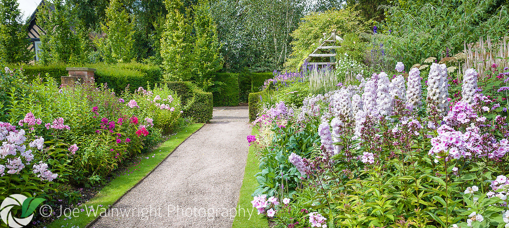 Delphiniums and Phlox line a path at Wollerton Old Hall Gardens, Shropshire.