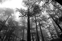 Shimla, India. 2007