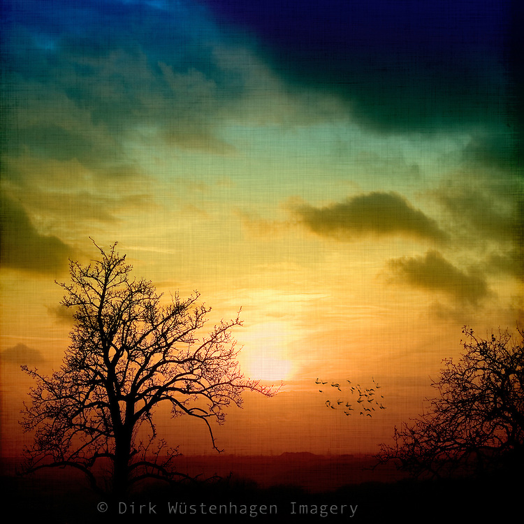 Romantic sunset. Tree silhouettes and a flock of birds.