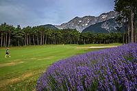 MIEMING  Oostenrijk,  - hole 1 met lavendel,  Golf Park Mieminger Plateau.   COPYRIGHT KOEN SUYK