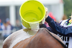 Horse care, Cooling - Endurance - Alltech FEI World Equestrian Games™ 2014 - Normandy, France.<br /> © Hippo Foto Team - Leanjo de Koster<br /> 25/06/14