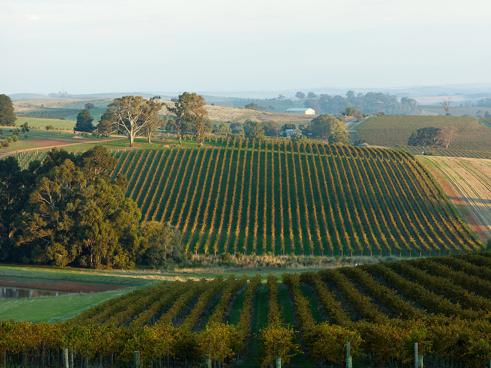 Grosset Wines and Mount Horrocks Wines Clare Valley vineyards
