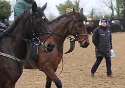 Tiger Roll (centre) during the stable visit to Gordon Elliott's yard at Cullentra House, County Meath.