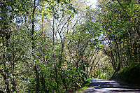 2014 March 20:  Windy road in Calistoga. Spring in the Napa Valley wine region.  Stock Photos
