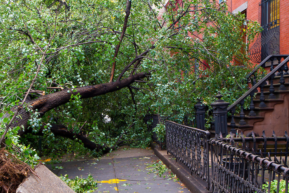 Rare tornado damage in Park Slope, Brooklyn. The storm hit in late afternoon and had winds over 100 mph, and was personally witnessed by this photographer. It passed directly over my house, and it seemed a miracle that the trees outside my house did not come down. The most severe damage, including downed trees, occurred about a block away. 9/17/10