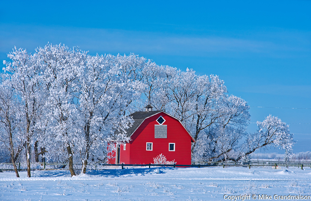 Red barn surrounded by trees covered by heavy hoarfrost<br />