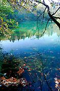 Autumn leaves floating on lake, Plitvice National Park, Croatia