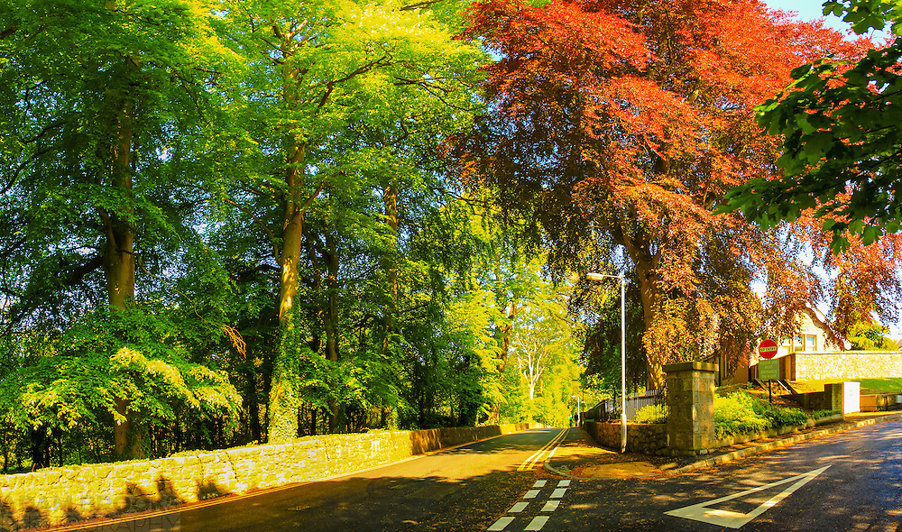 Trees on a sunny day by the road near Tower Hill Hospital in Armagh