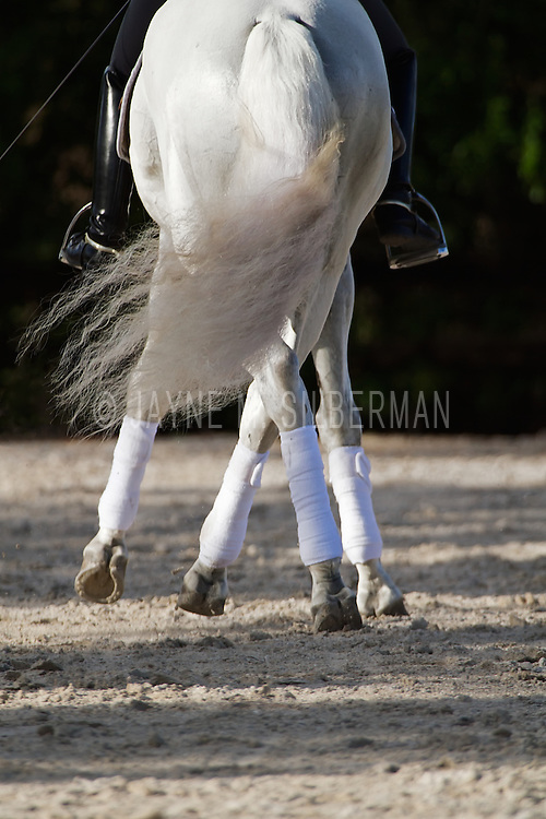 Rear view of Half-Pass in Dressage