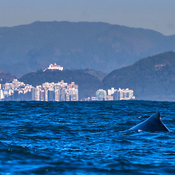 Baleia-jubarte com convento da penha ao fundo (Paisagem) fotografado em Vitória, Espírito Santo -  Sudeste do Brasil. Oceano Atlântico. Registro feito em 2016.<br /> <br /> ENGLISH: Humpback whale with Penha Convent in the background photographed in Vitória, Espírito Santo - Southeast of Brazil. Atlantic Ocean. Picture made in 2016.
