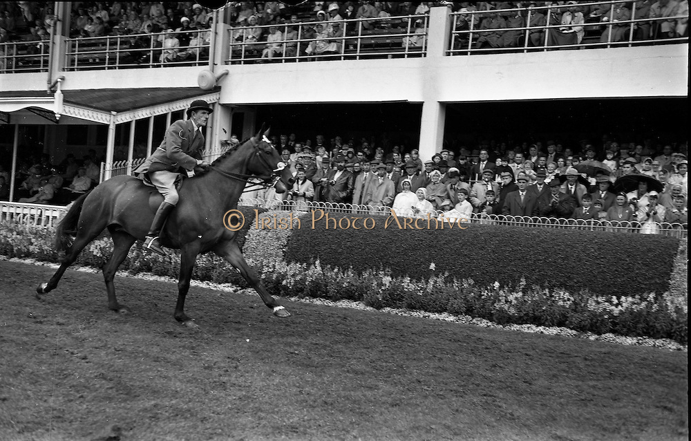 """09/08/1962<br /> 08/09/1962<br /> 09 August 1961<br /> RDS Horse Show, Ballsbridge Dublin, Thursday. <br /> Picture show Champion Hunter of Show parades in Enclosure, """"Badna Bay"""" owned by Duchess of Westminster."""