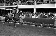 "09/08/1962<br /> 08/09/1962<br /> 09 August 1961<br /> RDS Horse Show, Ballsbridge Dublin, Thursday. <br /> Picture show Champion Hunter of Show parades in Enclosure, ""Badna Bay"" owned by Duchess of Westminster."