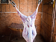 30 OCTOBER 2010 - PHOENIX, AZ:  A goat carcass ready to be butchered at the Goat Meat Store, owned by Ibrahim Swara-Dahab, in Phoenix, AZ. Swara-Dahab came to the United States from Somalia in 1998. He has built a thriving business as a Halal butcher and provides freshly butchered goats and sheep killed following the precepts of Muslim tradition. His business not only caters to Muslims in the Phoenix area but also to refugees and immigrants from Africa and Asia. His small butcher shop is on the Gila River Indian Reservation, about 100 yards from the Phoenix city limits and doesn't have either running water or electricity.    Photo by Jack Kurtz