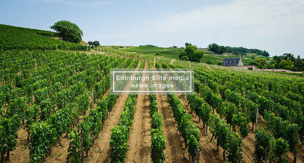 Vineyards near Saint Emilion, Dordogne, France<br /> <br /> (c) Andrew Wilson | Edinburgh Elite media
