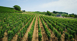 Vineyards near Saint Emilion, Dordogne, France<br /> <br /> (c) Andrew Wilson | Edinburgh Elite media
