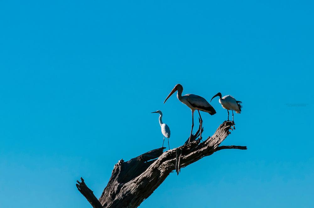 Birds, Kwando Concession, Linyanti Marshes, Botswana.