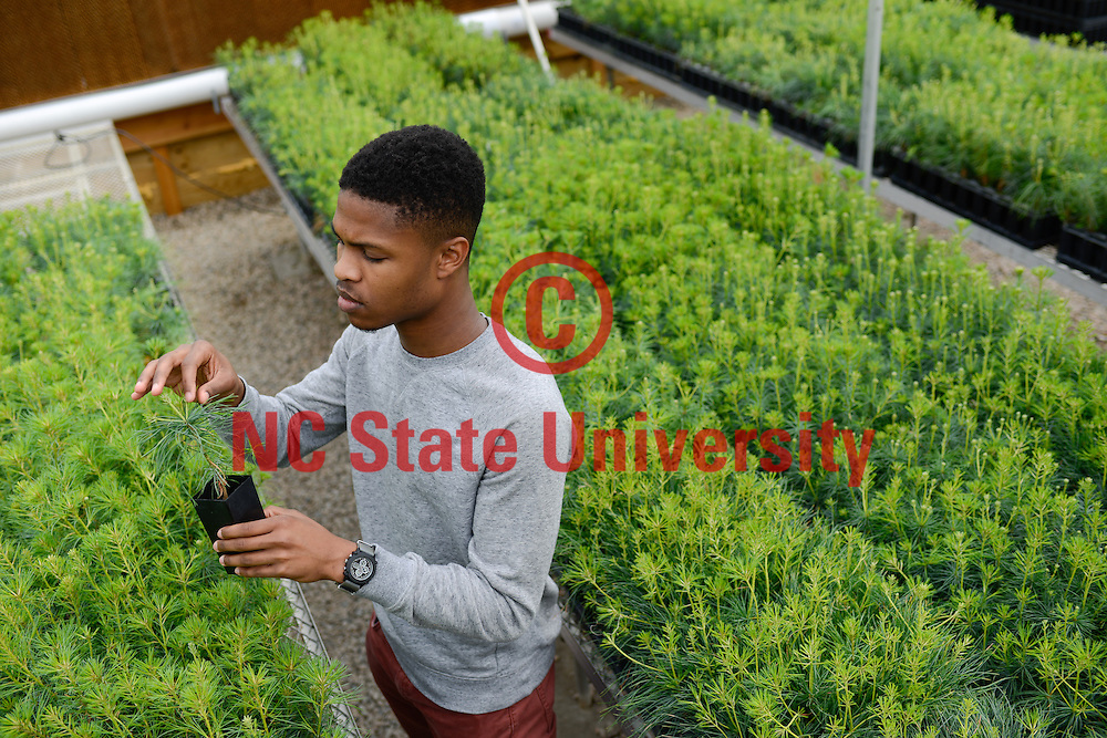 A CNR student works in a greenhouse. Photo by Marc Hall