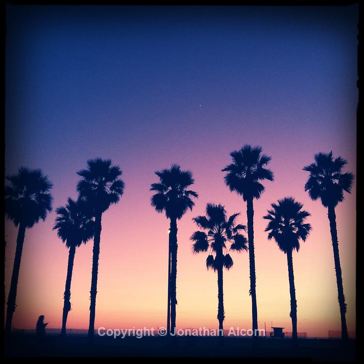 Palm trees at dusk in Santa Monica on January 16, 2012.