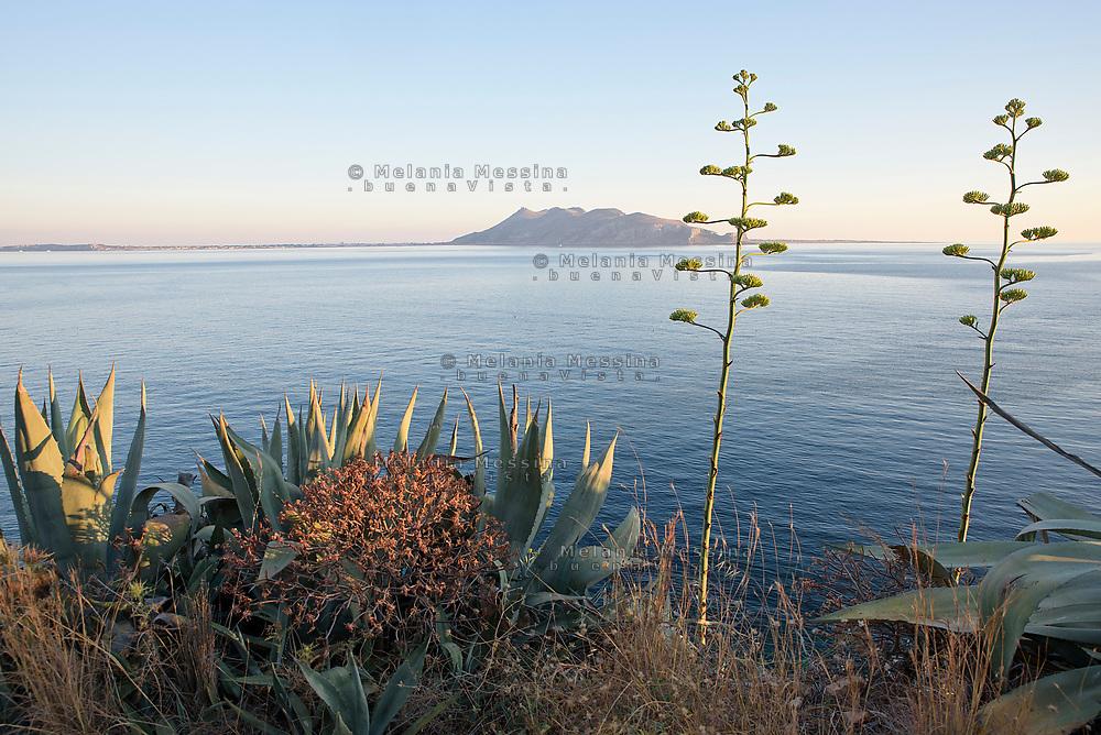 Le agavi del lungomare di Levanzo, sullo sfondo Favignana.<br /> Agaves in Levanzo island, Favignana island on the background