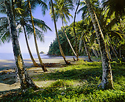 6203-1063 ~ Copyright:  George H. H. Huey ~ Hampstead Beach, northeast coast, morning, with coconut palms.  One of the few white sand beaches on Dominica.  Windward Islands, Lesser Antilles.  Caribbean.