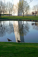 Canada Geese Walking Along Pond with Gateway Arch Reflection, Saint Louis, Missouri
