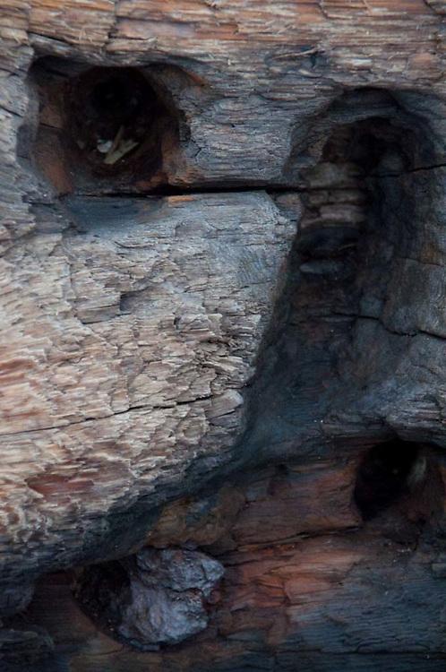 Driftwood Detail, Jones Island, San Juan Islands, Washington, US