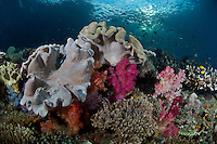 Soft Corals and Sunlight