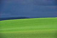 29/04/14 - MASSIF DU SANCY - PUY DE DOME - FRANCE - Polyculture dans le Massif du Sancy. Levee de ble dur - Photo Jerome CHABANNE