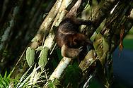 El Parque Municipal Summit es un jardín botánico y un zoológico de 250 hectáreas de extensión total (de las cuales 55 corresponden al jardín botánico), que se encuentra en las afueras de la ciudad de Panamá, en el municipio de Panamá, corregimiento de Ancón.<br /> <br /> Se creó en 1923 por parte de la antigua compañía del Canal de Panamá, como la Granja experimental Summit, para probar la adaptación de especies de plantas de diferentes partes del mundo al clima tropical de Panamá.<br /> <br /> En la década de 1960 se establece dentro del Botánico un pequeño zoológico que se ha ampliado poco a poco, teniendo hoy en día alrededor de 300 animales.<br /> <br /> Uno de los atractivos del zoológico es el Águila harpía, considerada el ave nacional de Panamá.<br /> <br /> <br /> ©Alejandro Balaguer/Fundación Albatros Media.