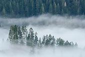 Elliott State Forest