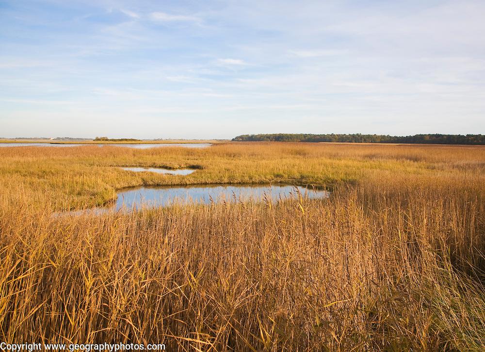 Walberswick National Nature reserve wetland environment marshes Blythburgh, Suffolk, England