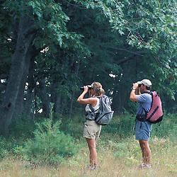 Kennebunk, ME. Bird watching at the Rachel Carson National Wildlife Refuge.