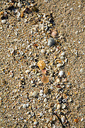 Shells on Shell beach, Island of Herm, Channel Islands, Great Britain