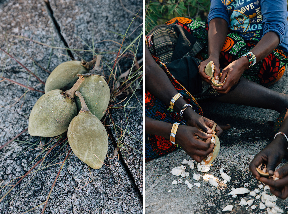 Fruit from the baobab tree is crushed up and turned into a paste with the consistency of porridge, the fruit is rich in vitamin C and is now considered a superfood in the West. Yaeda Valley, Northern Tanzania. Photo by Greg Funnell, March 2016.