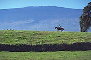 Parker Ranch, Island of Hawaii, Hawaii, USA<br />