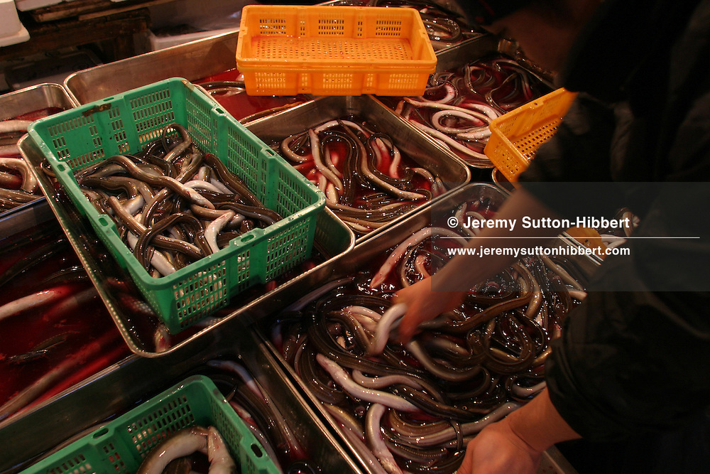 Eels lie in a tray of blood, on sale at Tuskiji fish and seafood wholesale market.