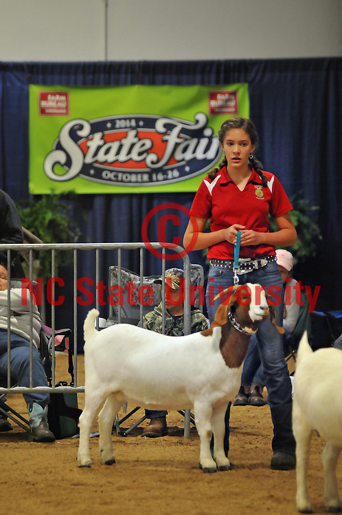 A young farmer stands with her show goat during judging.
