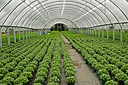 Guthrie Greenhouses