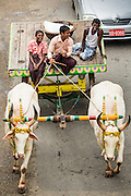 19 JUNE 2013 - YANGON, MYANMAR:   An ox cart is driven down Sule Pagoda Road in the heart of Yangon.   PHOTO BY JACK KURTZ