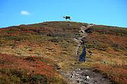 Sylene are mountains in Mid-Norway, on the border to Sweden. Also called Sylan, Sylarna (swedish) and  Bealjehkh (sami). Protected nature since 11. April 2008. The highest peak is Storsylen (1762). Romboleden, pilegrimsleden fra Sverige til Trondheim og Nidaros, går gjennom Skardørsfjellene i Tydal.