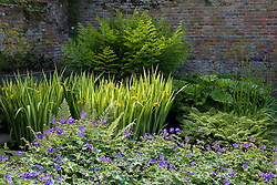 Iris pseudacorus 'Variegata' with geranium and ferns in a shady corner at Sissinghurst Castle Garden