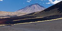 VOLCAN PAYUN LISO (3.833 m.s.n.m.) Y CAMINO EN EL SUELO NEGRO DE PIEDRAS VOLCANICAS DE PAMPA NEGRA, COIRONES (Festuca gracillima - fam. poaceas), RESERVA PROVINCIAL LA PAYUNIA (PAYUN, PAYEN), MALARGUE, PROVINCIA DE MENDOZA, ARGENTINA (PHOTO © MARCO GUOLI - ALL RIGHTS RESERVED)