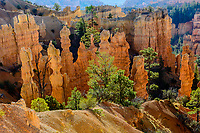 tower rock formations & hoodoos; Bryce Canyon NP., UT