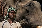 Asian elephant (Elephas maximus) domestic &amp; Mahout used for logging<br /> Nagaland,  ne India