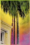 Taken at Vizcaya in Miami.