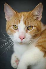 Tim Basey - Cat