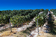 Alentejo vineyards