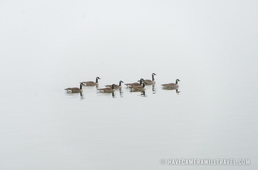 Geese on the Potomac disappear into the mist on a cold winter's day in Washington DC.