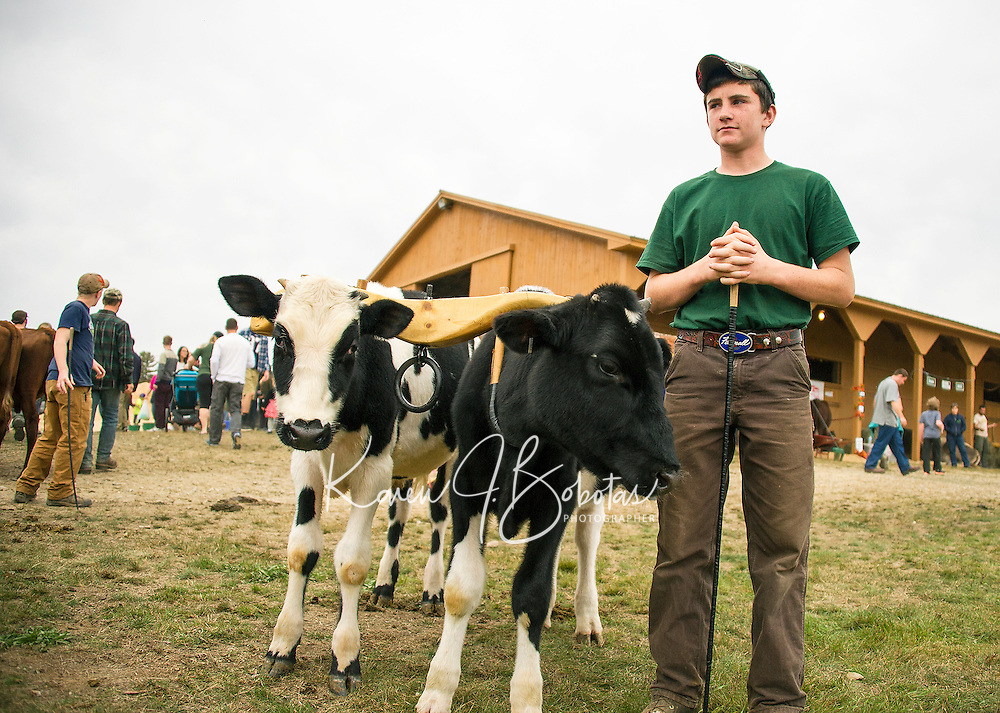 Evan Woodman of Claremont, NH waits at the gate with Bull and Dozer for the Working Steers show on Saturday afternoon at the Sandwich Fair.  (Karen Bobotas/for the Laconia Daily Sun)