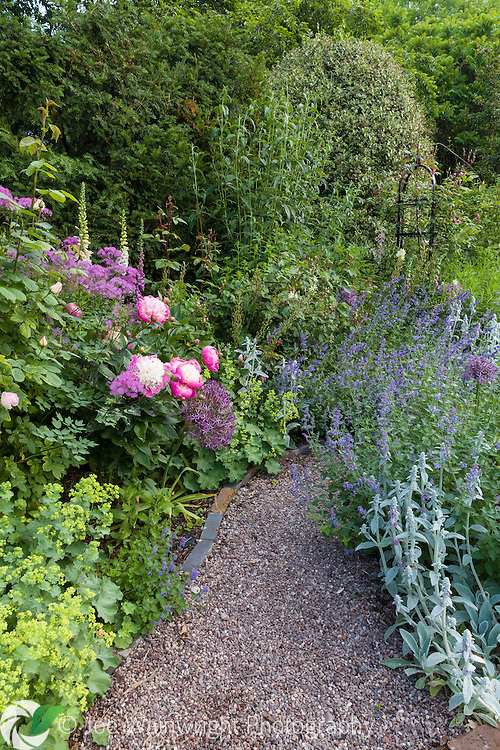 The Rose Walk at Dorothy Clive Garden, Staffordshire - photographed in June